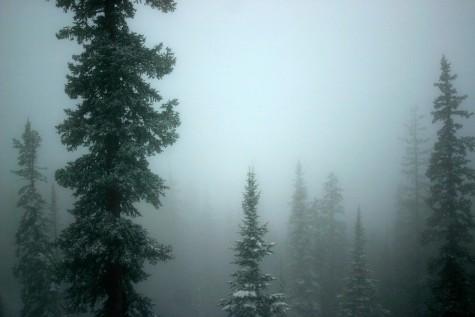 foggytrees2